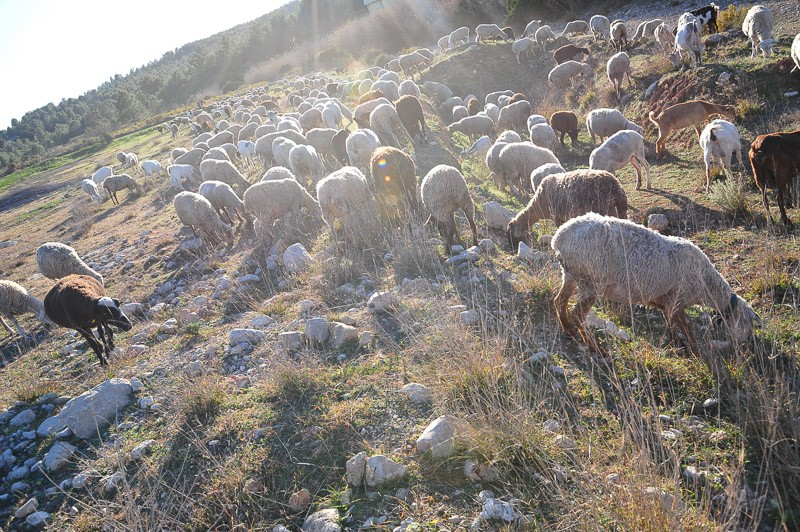 old farming traditions in Spain