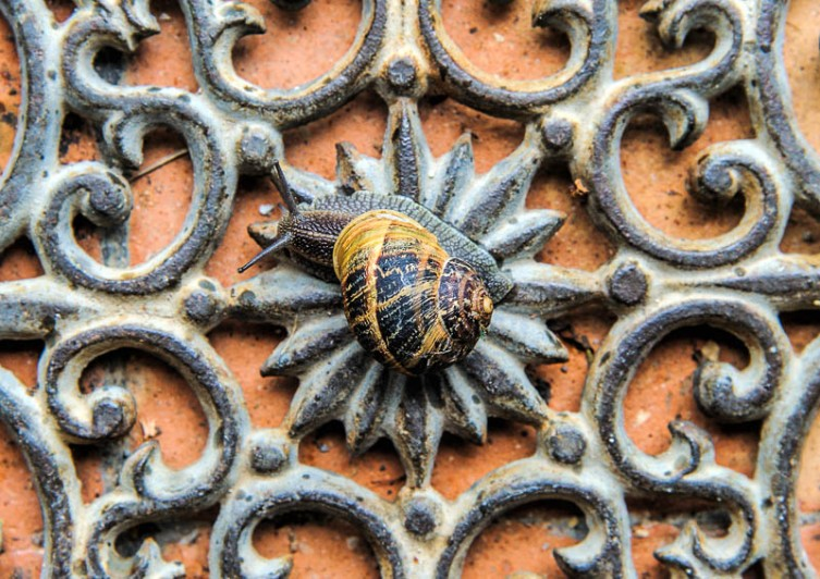 After a rare rainfall, this snail settled on the door mat
