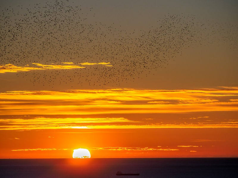 As the sun rose, I panned a massive flock of birds across the sky
