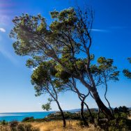 Trees growing to the sea indicate the direction of the prevailing winds