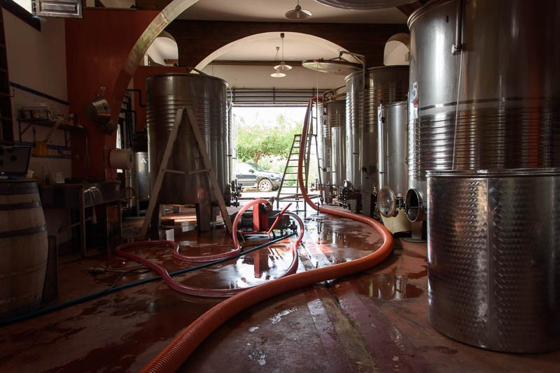 Wine flows through thick serpent-like tubes to metal storage tanks