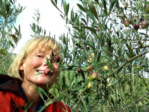 Harvesting my own olives, 2012