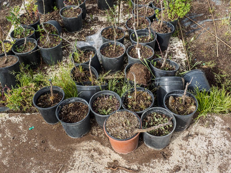 A collection of strays, untended, and typical of the nursery - Spain