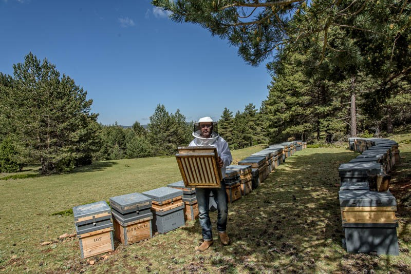 Toni the beekeeper and beekeeping