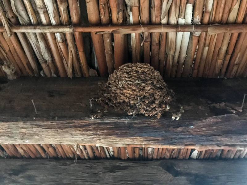 Swift nest in a spanish casa