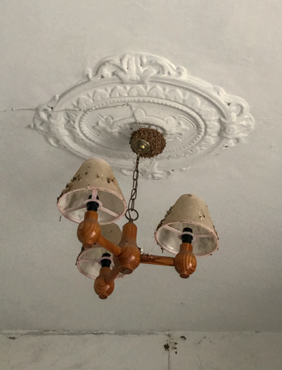 A spanish swift nest in an abandoned casa