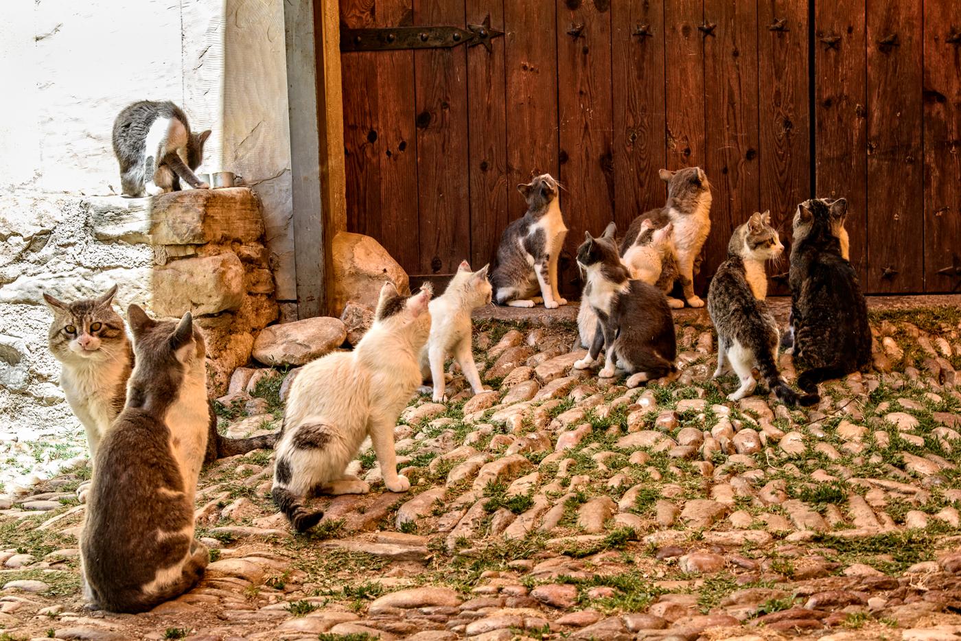 Cats of La Estrella