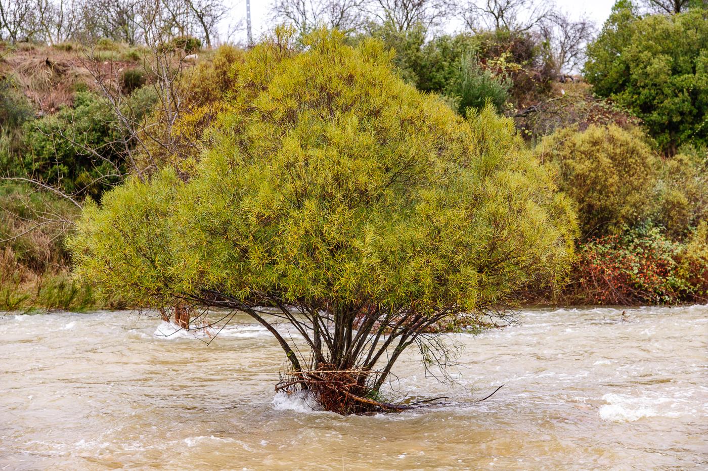 Dry river after rain, El Maetrat