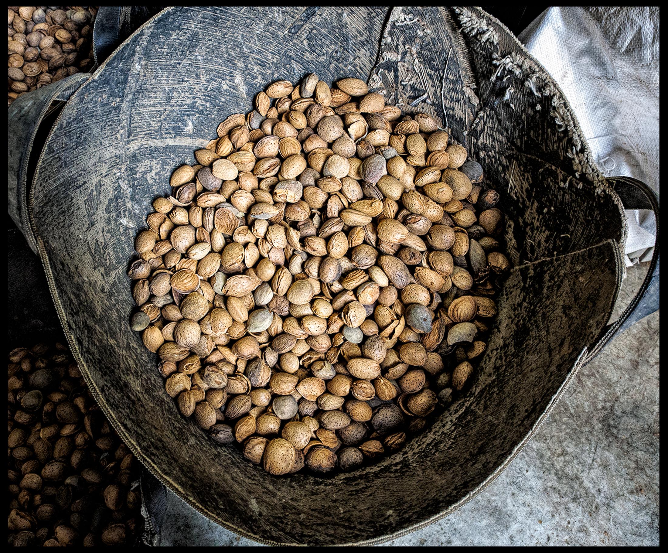 Organic almonds from Masia Lavanda