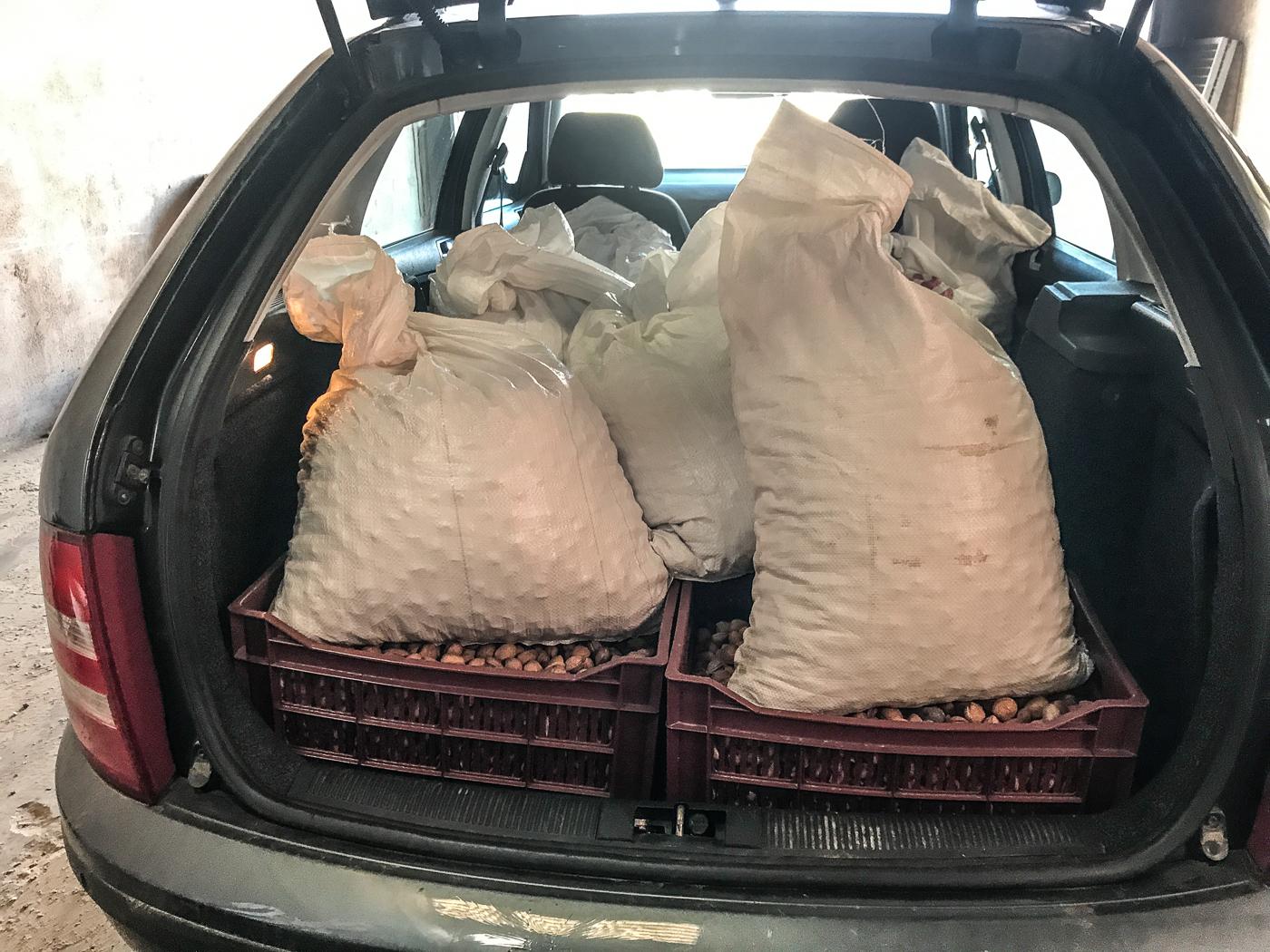 Almonds in bulging bags piled in my car