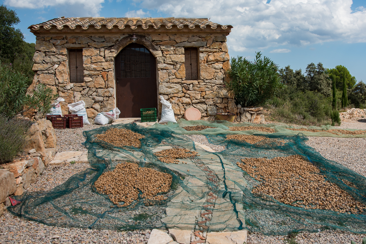 Laying the almonds out to dry seemed a good idea at the time...until it rained