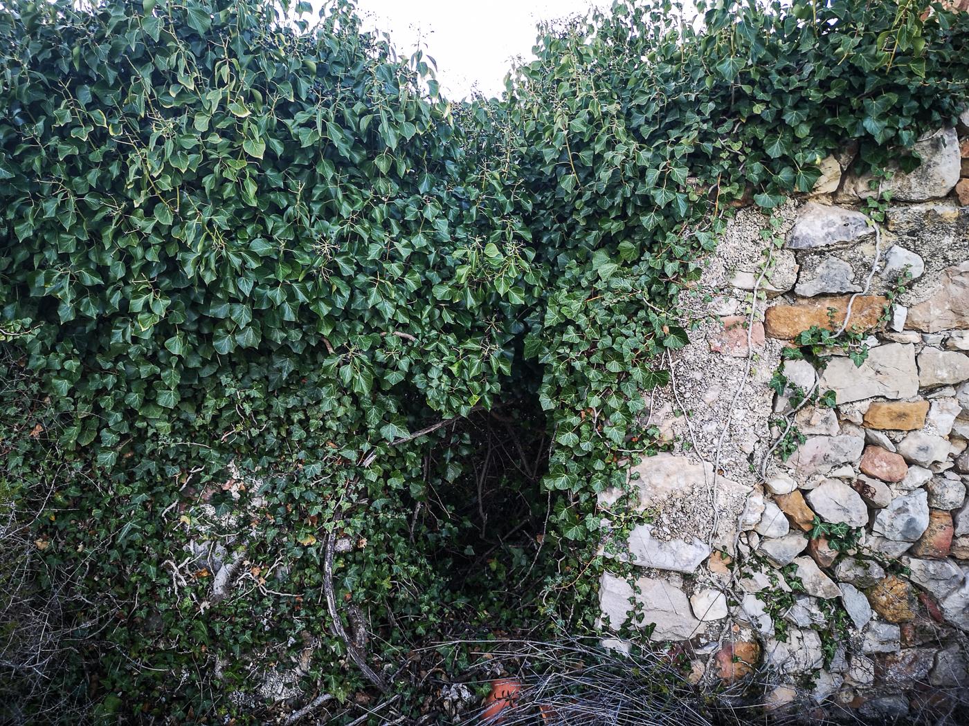 The secret garden had transformed itself into a cornucopia of weeds