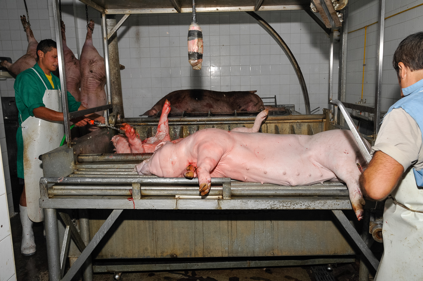A grim torture chamber for pigs, hopefully dead